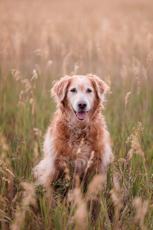 Good Morrow Photography - RISE Pet GMP 2 e1592862079592