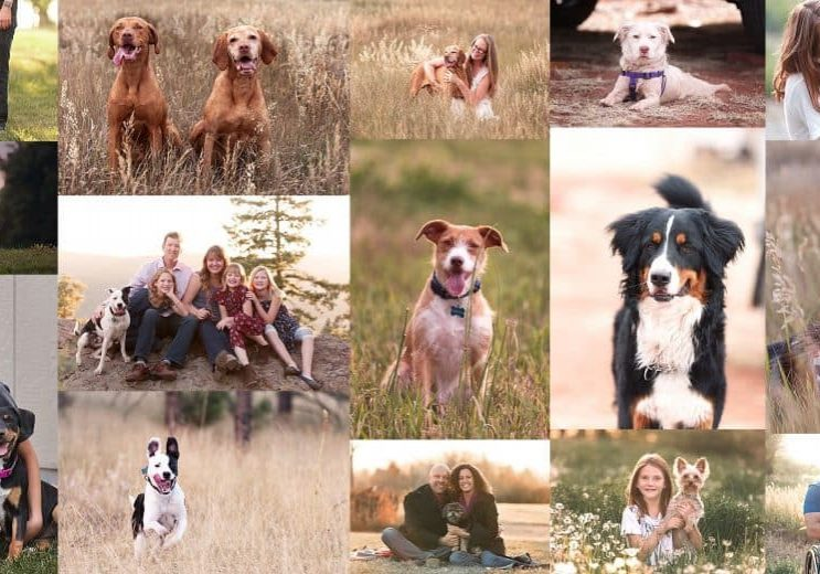52 Weeks of Dogs Featured Image